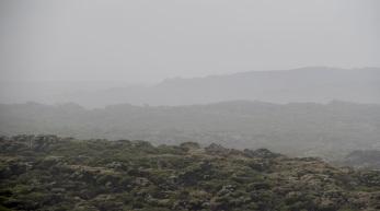 Flowering melaleucas in the mist, viewed from Southern Ocean Lodge
