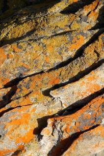 Rocks with lichen, Wheatons Beach, D'Estrees Bay