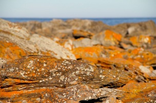 Rocks with lichen, Wheatons Beach, D'Estrees Bay