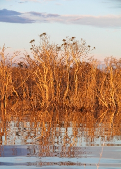 Our paperbark lagoon at sunset