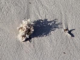 Seaweed on Wheatons Beach, D'Estrees Bay