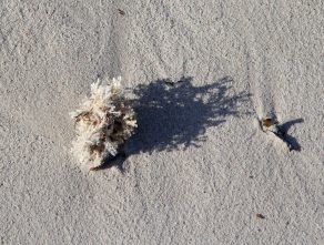 Seaweed on Wheatons Beach, D'Estrees Bay